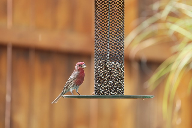 Karmnik dla ptaków odporny na wiewiórki – Jak wygrać wojnę